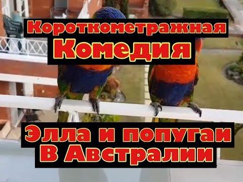 АВСТРАЛИЯ КОМЕДИЯ Элла и Попугаи Самые смешные Радужные Лорикеты Trichoglossus haematodus