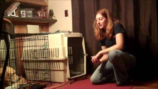Crate Training 101:  Should I Crate My Dog? - Take The Lead K9 Training