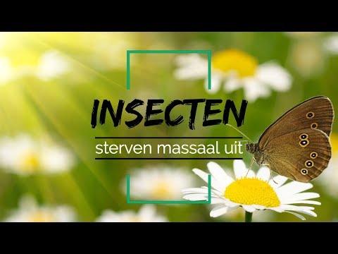Het gaat niet goed met de insecten