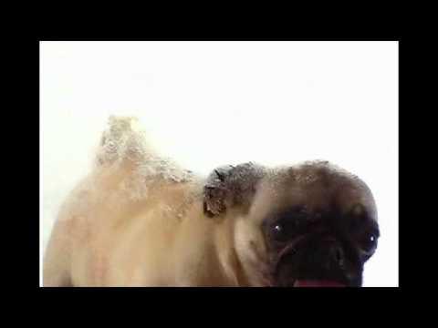 A cute dog licks your screen!