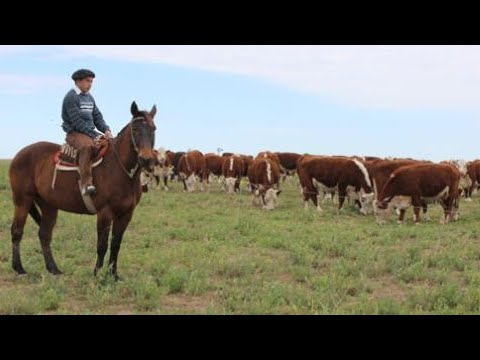 Argentina Agriculture: New policies set to beef up exports