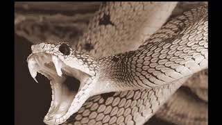 Phụ nữ mang thai nằm mơ thấy rắn là điềm báo gì