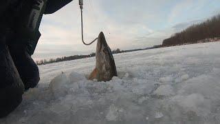 Бешеный клев щуки на жерлицы и окуня на блесну Трофейная щука и дикие матросики Лучшая рыбалка года