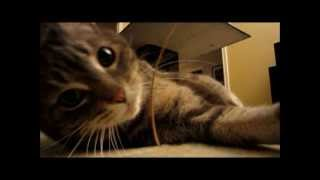 Kitty Exercises: Train Your Cat Into A Vicious Predator!