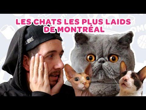 Les chats les plus laids de Montréal