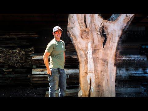 blaise-in-trees-|-buying-hardwood-lumber-#2