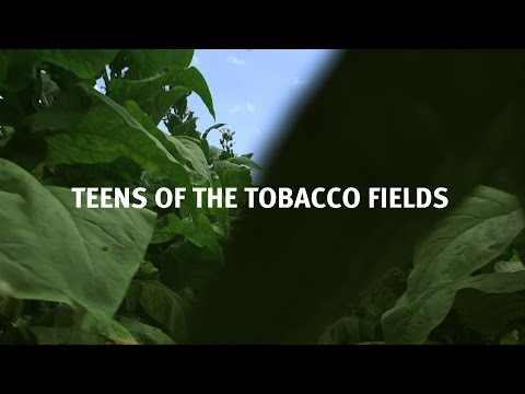 Teens of the Tobacco Fields