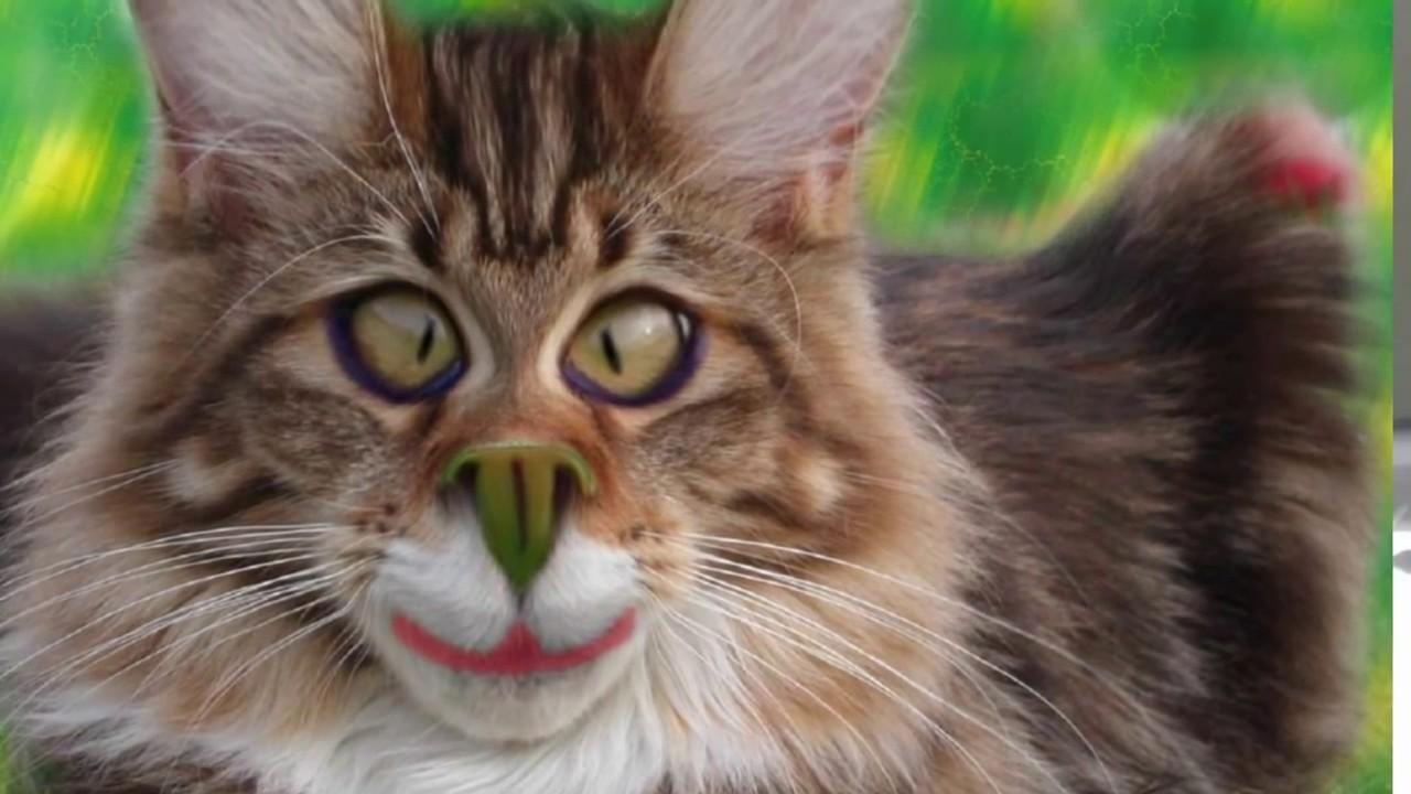 Добрые, веселые и смешные картинки про животных котов ...