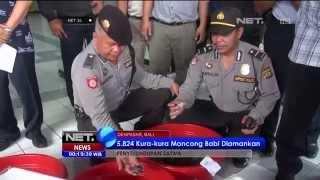 5.824 Kura kura Moncong Babi Asal Timika Diamankan di Denpasar - NET24