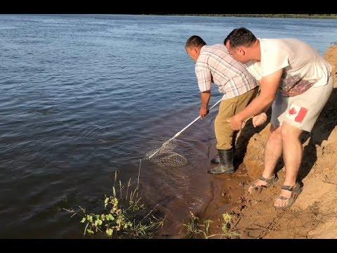 Рыбалка на закидушки. Ахтуба, сазан - сентябрь 2019.
