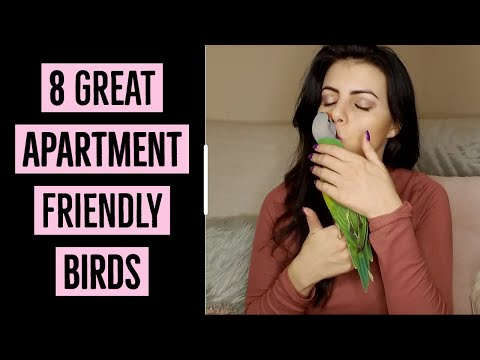 8 Great Apartment Friendly Birds | PARRONT TIP TUESDAY