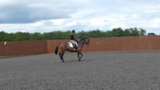 Romarnic Reverie 4 Year Old Mare