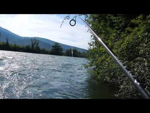 Big Battle With Big Trout On South Fork Snake River