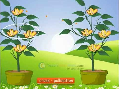 Sexual and asexual reproduction in plants powerpoint