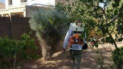 Mosquito Control Gilbert AZ - Bug Guardian Pest Prevention