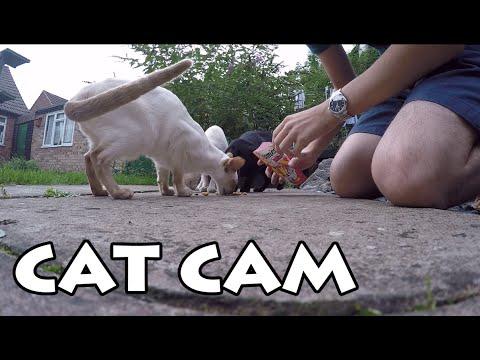 Glorified Cat Cam & Announcement!