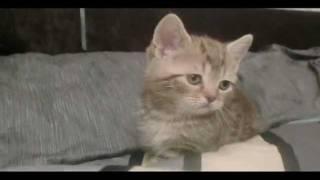 Кот по имени Джаз.avi