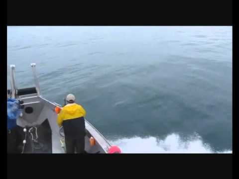 Salmon drift net fishing in cook inlet 7 14 12 youtube for Drift net fishing