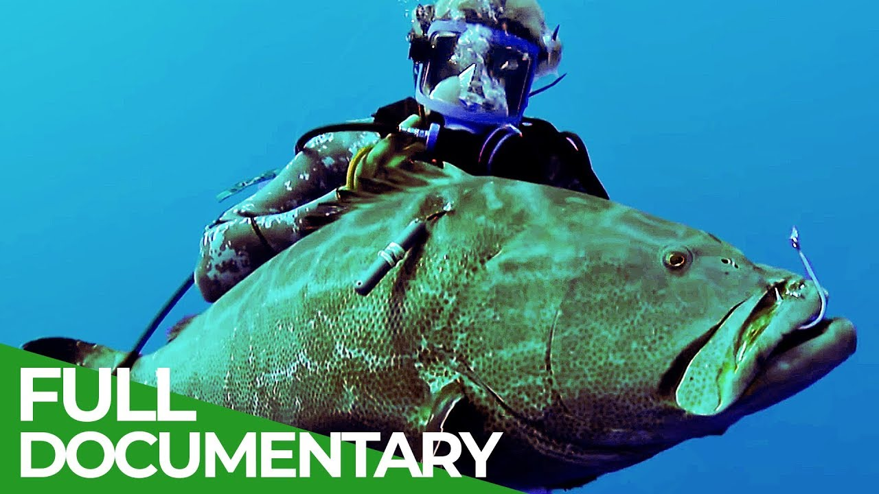 Bermuda Black Grouper | Ocean Vet | S01 E07 | Free Documentary Nature