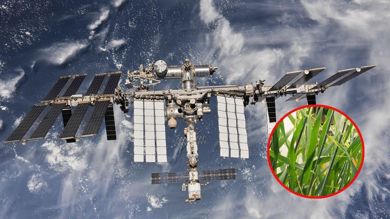 NASA's OCO-3: Watching Plants Grow and Glow