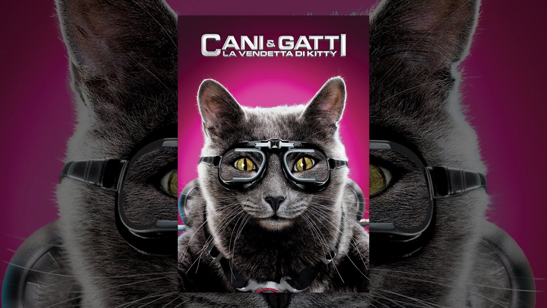cani e gatti - la vendetta di kitty - youtube