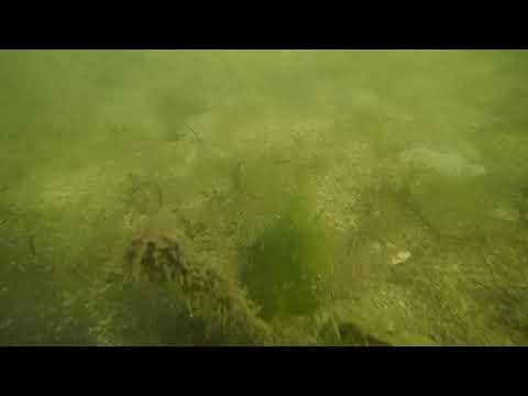 Ocean Reef Marina Dead-Zone