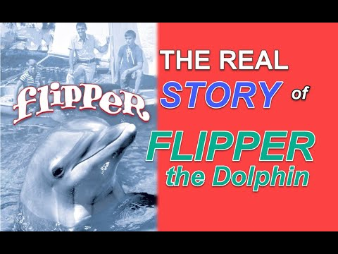 The REAL Story Of FLIPPER The Dolphin!