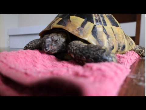 Hibernating Tortoise Unboxing!