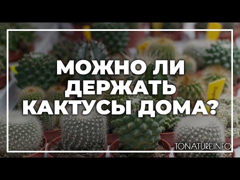 Можно ли держать кактусы дома?   toNature.Info