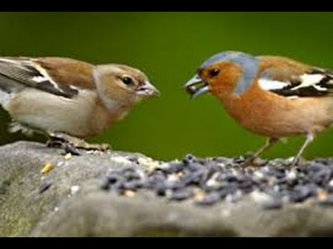 Image result for bird eating