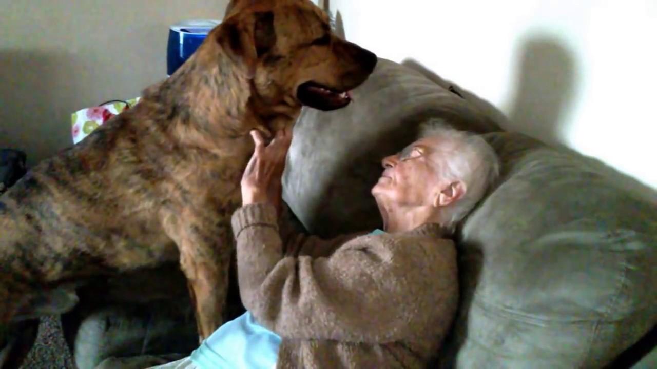 Big Happy Puppy Gives Great Grandma Loves