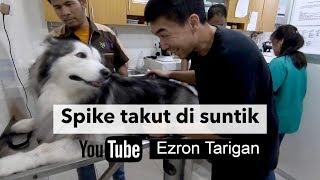 SPIKE TAKUT DI SUNTIK - Ezron Tarigan & Humble Spiker