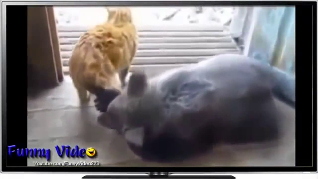 Insane Funny Cats interact with Wild Animals Funny Cat Videos