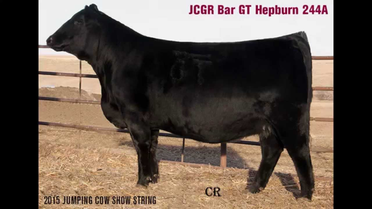 Download JCGR Bar GT Hepburn 244A - 2015 NWSS Show String