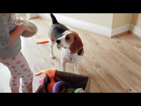 Little Girl Teaching Dog How to Clean up Toys | Dog training