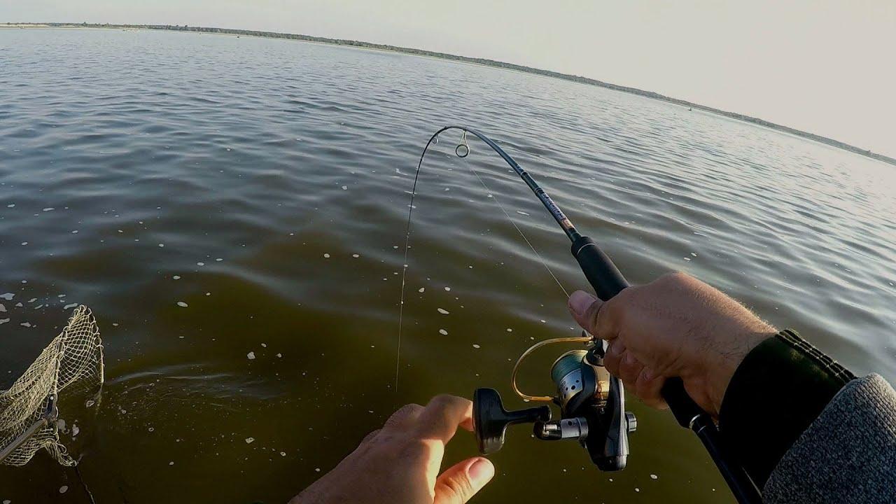 Ультралайт в дугу! Кабаны клюют на легкую снасть. Рыбалка на судака. Рыбалка. Ловля судака в июне.
