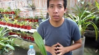 Curso de orquídeas on-line #4: El riego