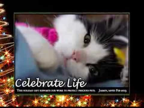 Please Consider A Holiday Gift Donation To Marshfield Area Pet Shelter Youtube