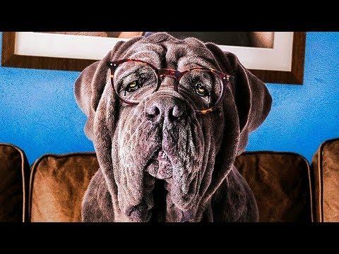 Моя собака Идиот — Русский трейлер (2020)