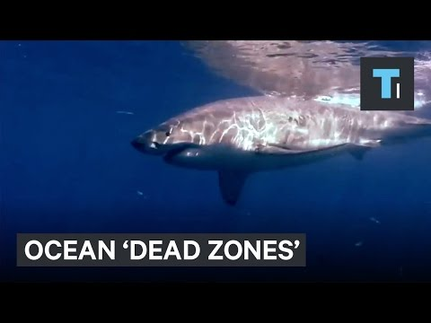 Ocean � zones' exist — and there are more of them than we thought