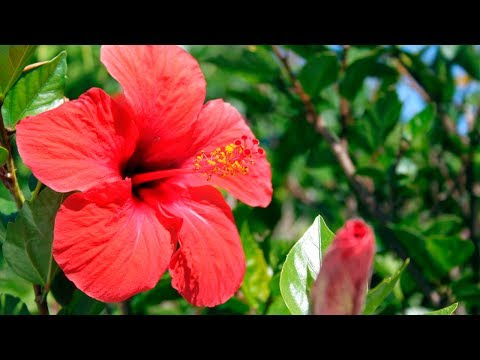 How to Grow & Care for Tropical Plants