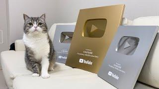 とうとうYouTubeからもち様に金の盾が贈られてきました!
