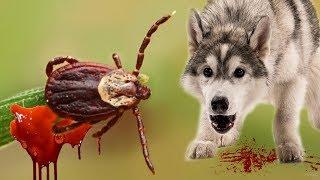 КЛЕЩИ ВРАГИ ДЛЯ СОБАК / обработка собак от клещей весной