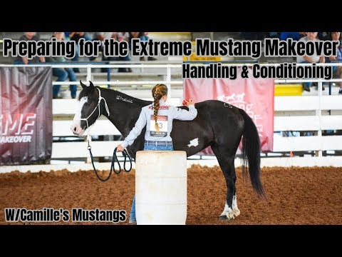 Preparing For The Extreme Mustang Makeover//Handling & Conditioning