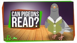 Can Pigeons Really Read