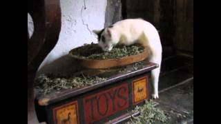 Cats high on catnip freaks out Great Dane