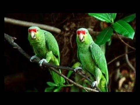Amazonas Doku