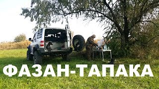 ФАЗАН-ТАПАКА ОХОТА НА КУБАНИ С СОБАКОЙ РЕЦЕПТЫ СЮФ