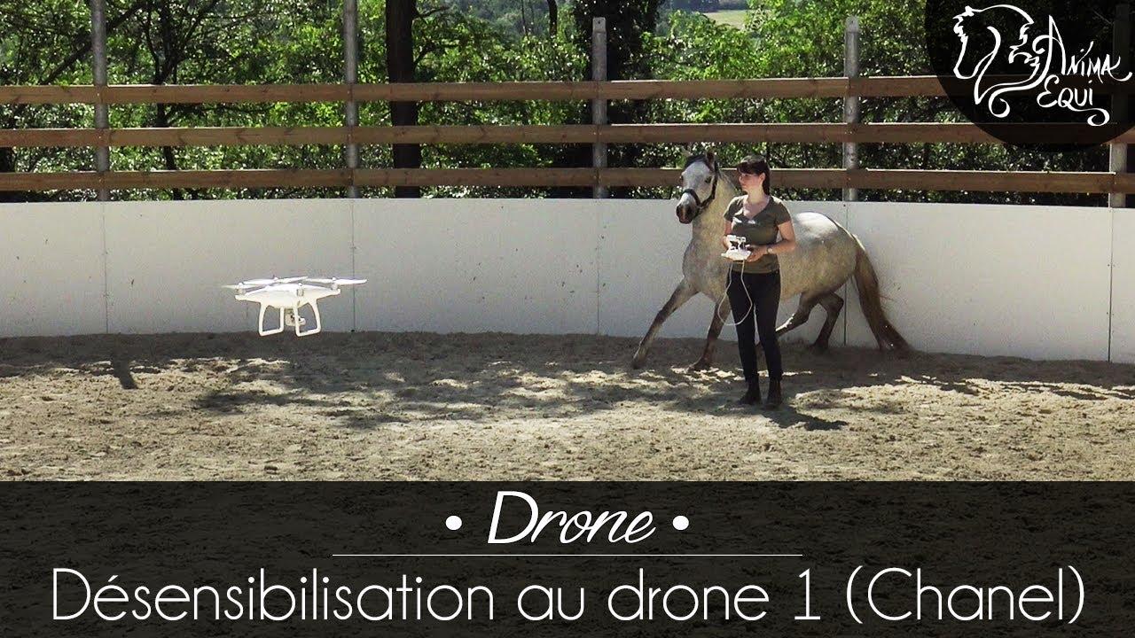 996e9d80c8b65 PRATIQUE • Chanel   Désensibilisation au drone 1 - YouTube
