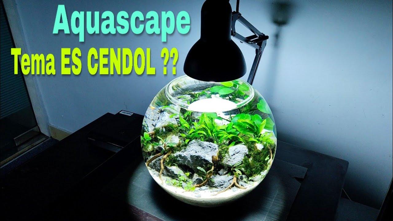 Fish Bowl Aquascape Tanpa Soil Tanpa Pupuk Dasar Tanpa Bakteri Starter Dan Tanpa Filter Youtube